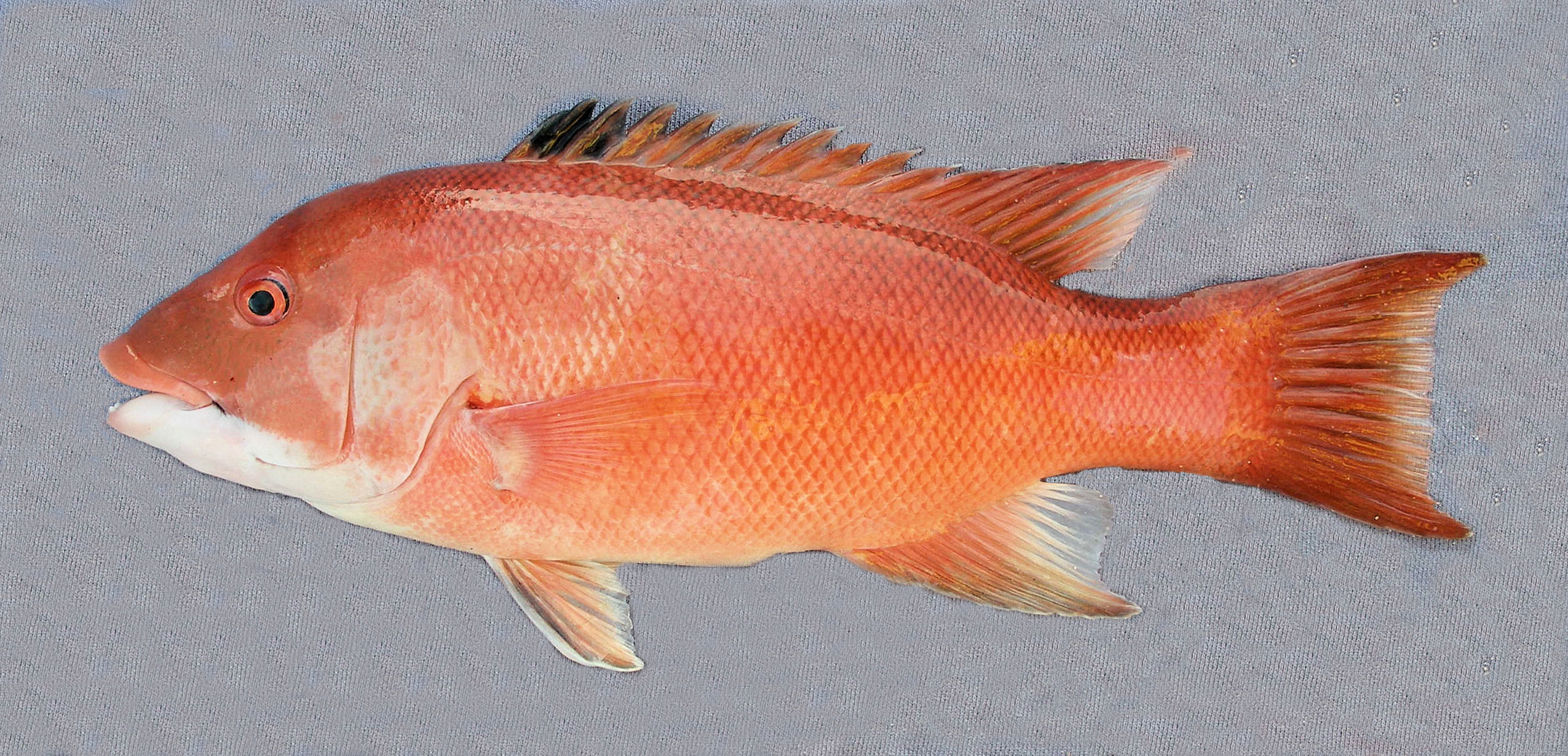 Fish Head Beach Ca